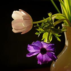 Een bloemetje.