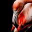 boze flamingo