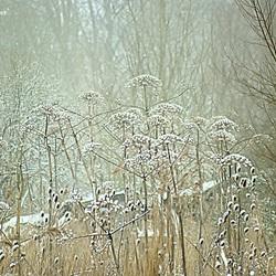 Wintergevoel 3