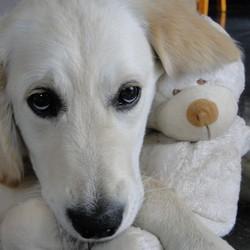 Teddybearlove