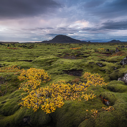 Autumn Lava Fields