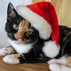 Saschy als Kerstkitten