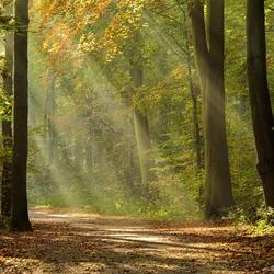 zonneharpen in het Haagse Bos