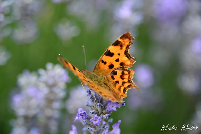 Vlinder - Spelen met scherpte en diepte