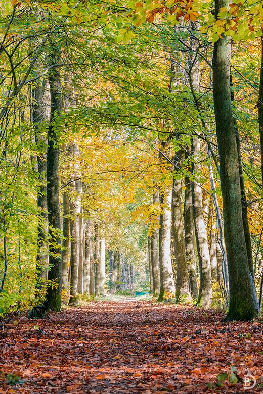 Path to autumn -