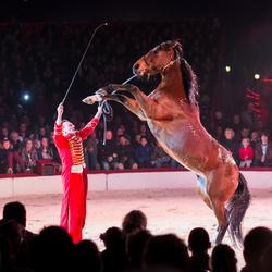 De paardendresseur van Circus Scott