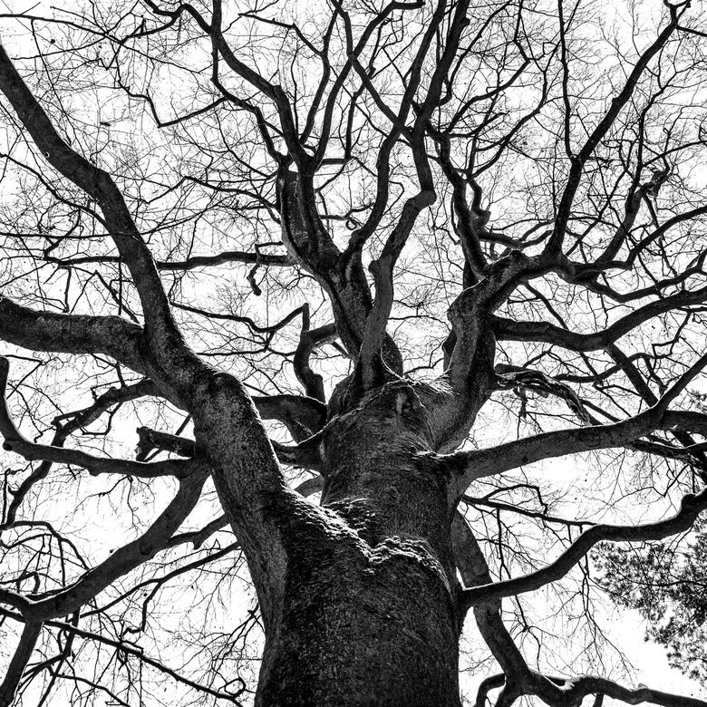 Een boompje opzetten -
