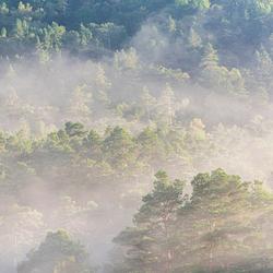 Mistige bossen in Noorwegen