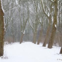 Fairy winterland