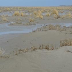 Nieuwe duinen op Terschelling