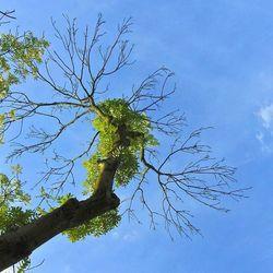 Bomen reiken naar de hemel