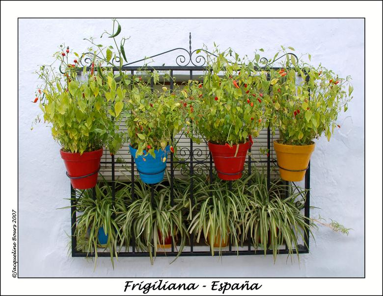 Espana 1 - Frigiliana is een mooi Moors dorpje 6 km ten noorden van Nerja, Andalusië
