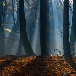 Ochtend met mist