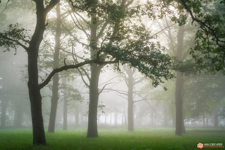 "Misty Mornings - Misty morning<br /> <br /> Groeten Frederik<br /> Volg <a href=""http://www.vanderveerfotografie.nl"">www.vanderveerfotografie.nl</a"