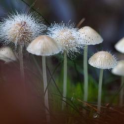 Het einde van paddenstoelen