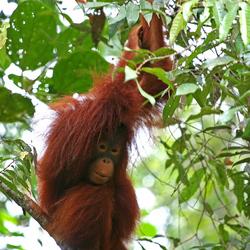 Kind van het oerwoud