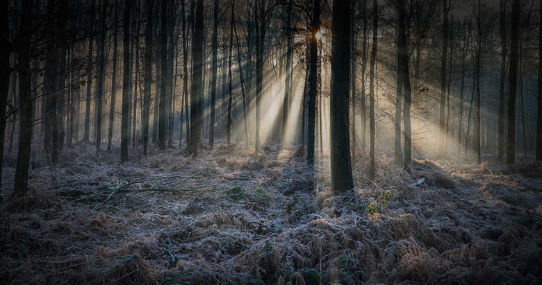 winterbos - Winter Breda Liesbos