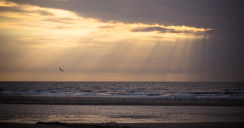 Spotlight. - De laatste zonnestralen tussen de wolken door.  Precies op het juiste moment kwam net die ene vogel een rondje zweven.