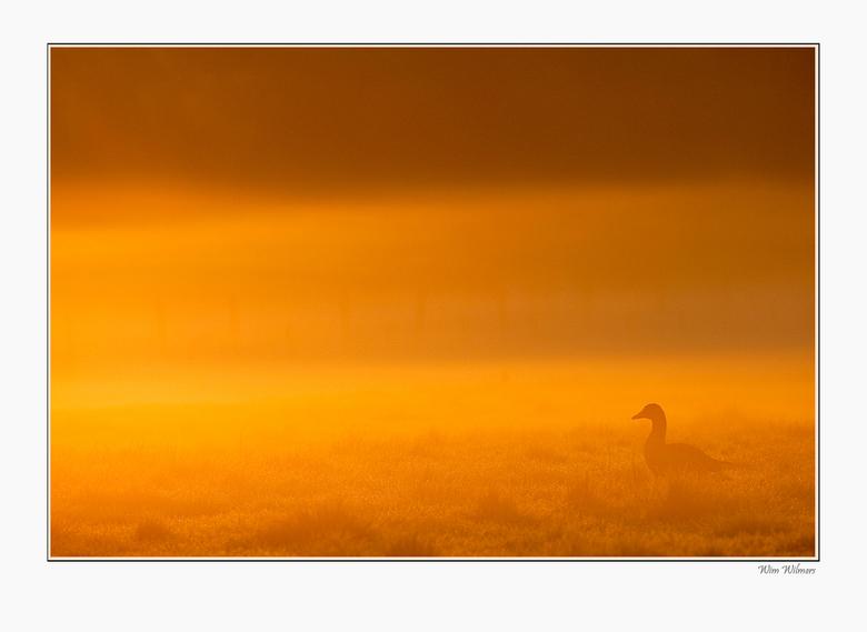morninglight - Heel fraai licht afgelopen zondagochtend, heel vroeg op staan en genieten maar
