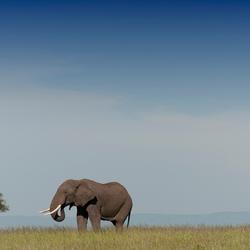 Landschapfotografie met Olifant - Masai Mara - Kenia