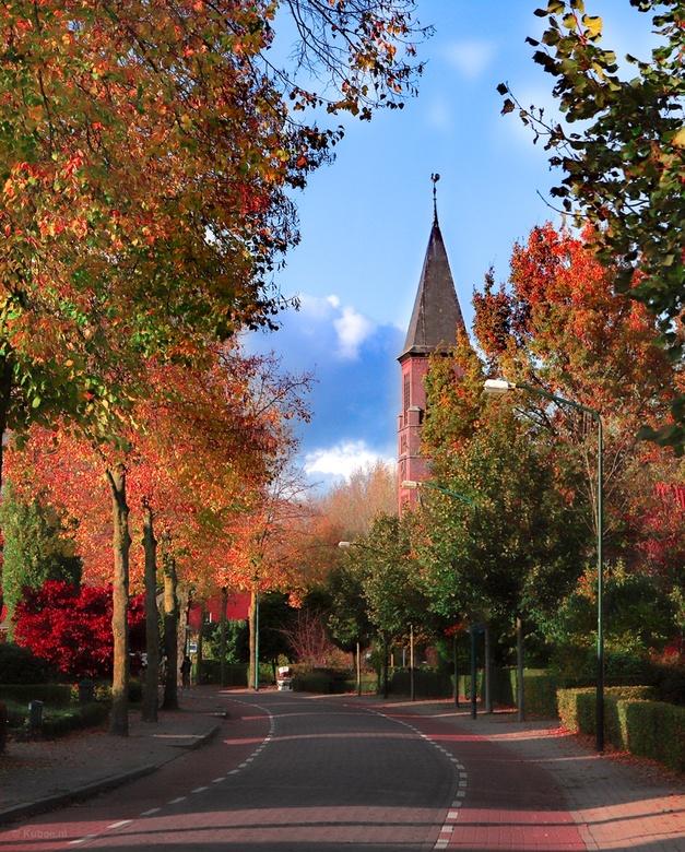 Biestsestraat in Biest - Biestsestraat in Biest-Houtakker in de herfstkleuren met de kerktoren op de achtergrond.