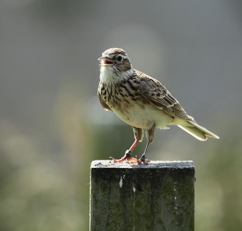 vogels in Blijdorp -