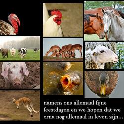 wens van mijn dierenvrienden.............