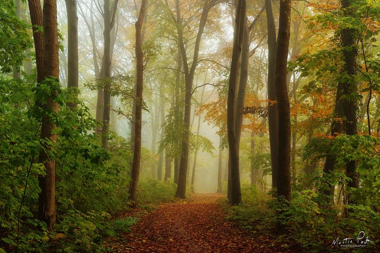 Green November -