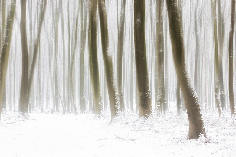 Winter - Winterse omstandigheden afgelopen weekend. Klein beetje beweging in de bomen gebracht om het beeld wat versterken.