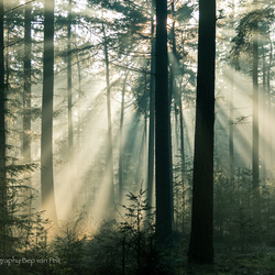 Winter zonneharp in de Oisterwijkse bossen