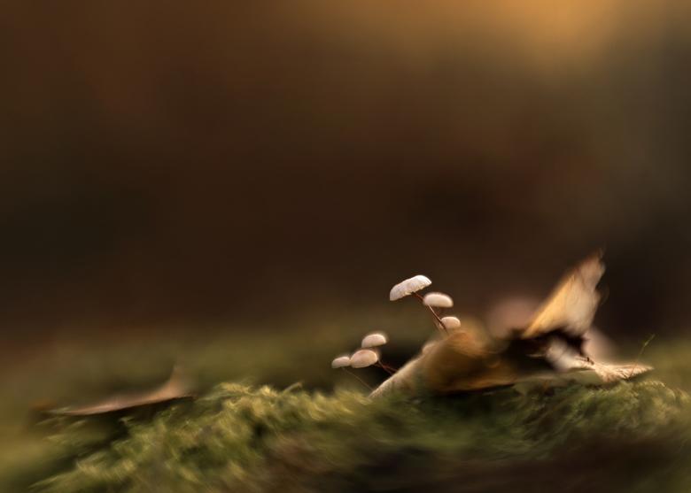 Klein, kleiner kleinst... - Gisteren een paddenstoelenzoomdagje gehad. En wat was het leuk, heerlijk weer, leuke mede zoomers. Kortom gewoon genieten