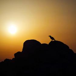 Bird watching sunset Sardegna