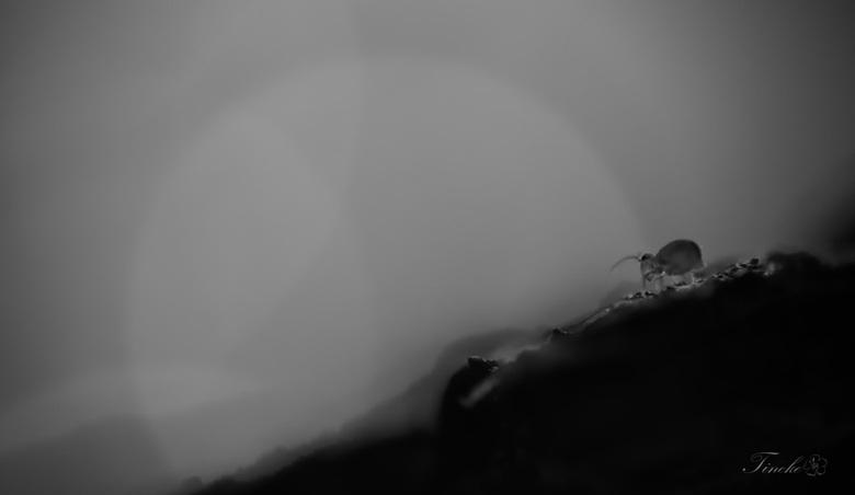in the dark -