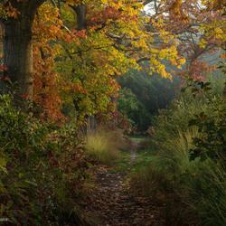 Mooie Herfstkleuren in de Omgeving van Voorheen Alphen en Riel.