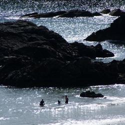 Zwemmen in Schotland