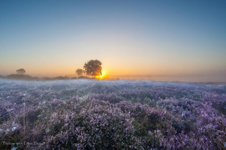 Zonsopkomst op de hei - Ik wilde al een tijd een zonsopkomst op de heide fotograferen. Natuurlijk had ik daar een beeld bij, maar dan moesten de omsta