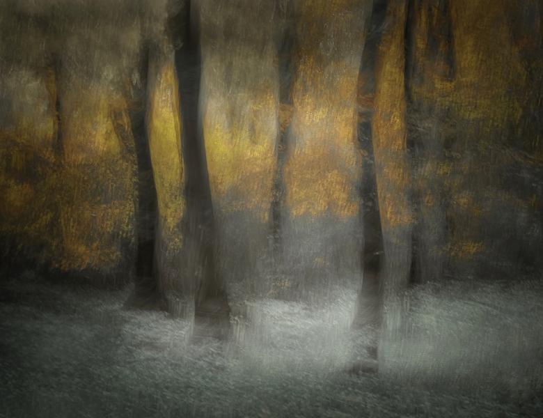 Dancing trees - Het bos bij Drie is prachtig met zijn dansende bomen. Nu eens wat anders in beeld gebracht. Foto is gemaakt met meervoudige belichting