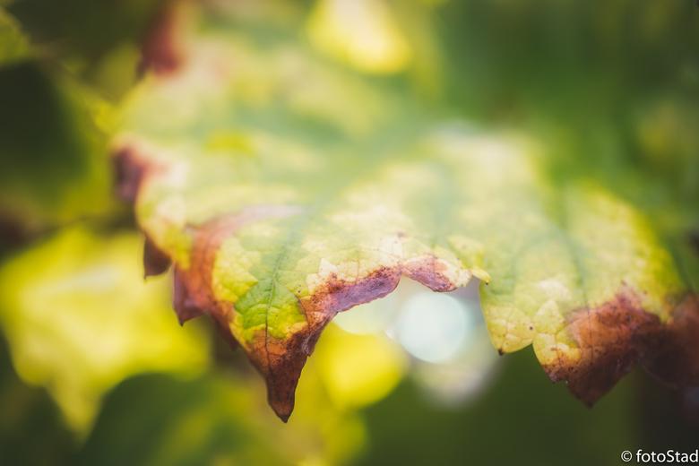 beginnende herfst