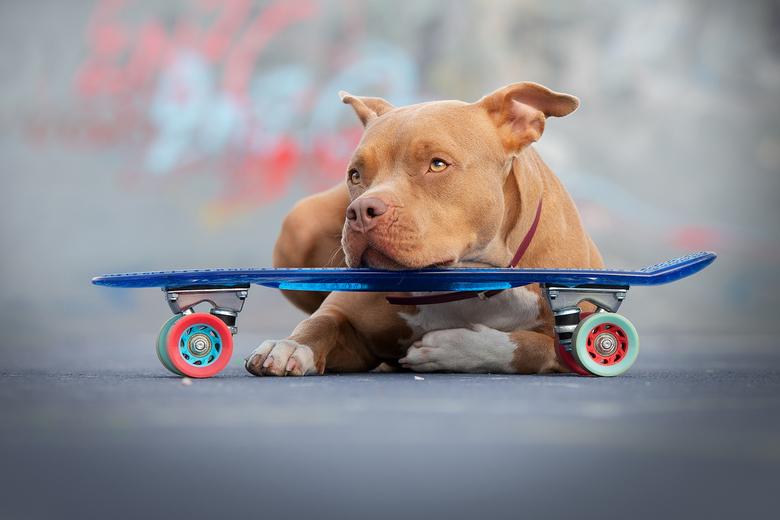urban dog... - Helaas kon ik zaterdag niet naar de paddestoelen zooxdag komen, maar ik geniet van de gave foto's die allemaal gepost worden. Ik h