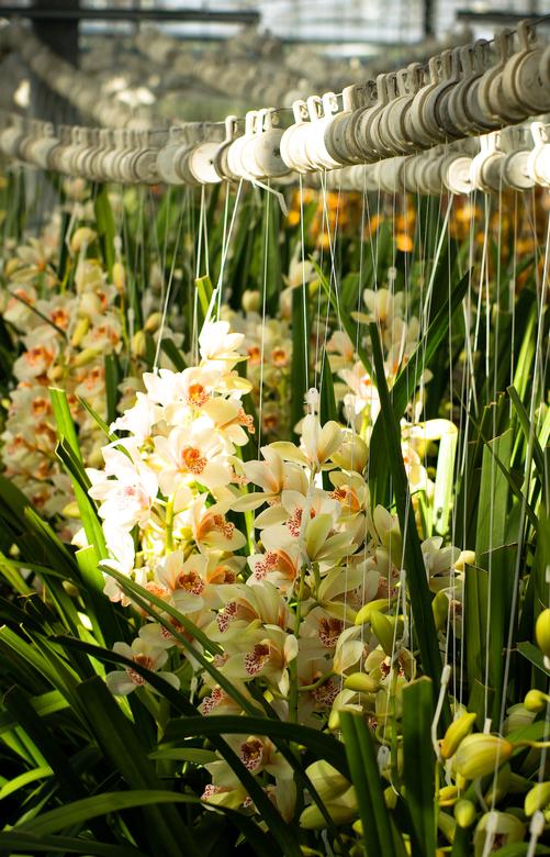 Kom in de kas 02 - Op 31 maart en 1 april 2007 was het weer 'Kom in de kas', een uitgelezen moment om de productie van bloemen en groenten o
