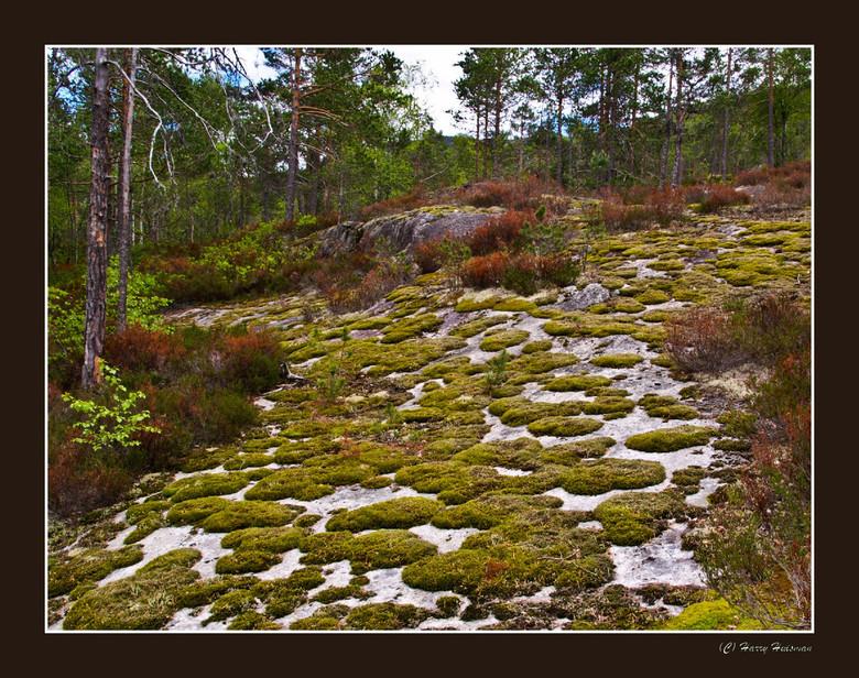 Eilandjes van mos - Het plantensortiment dat je in de natuur op je wandelpad tegen komt vertelt veel over de grond waarin (-op) het wortelt. Omgekeerd