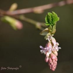 Voorjaar