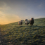 Schapen in de ochtendzon in Zuid-Beijerland