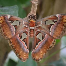 Een mooie grote vlinder