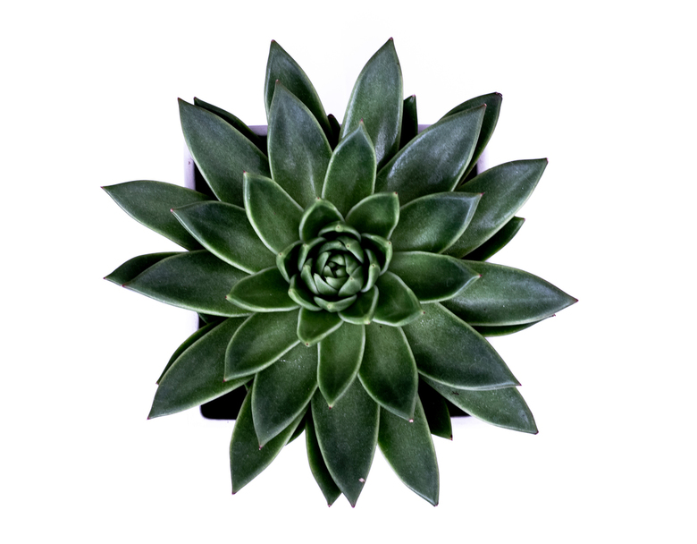 Green Simplicity - Eenvoudige foto van een plant. Gebruik gemaakt van natuurlijk licht en exposure compensation.
