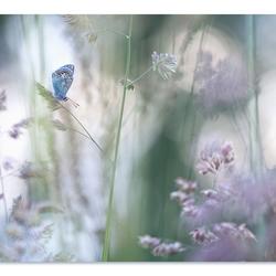 Dromen met bloeiende grassen 2
