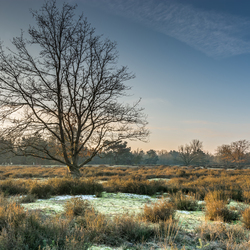 Winter Kessel Heide