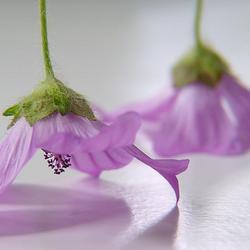 """Dansende bloemen""..."