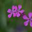 De drie bloemen