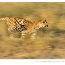 Run cat run